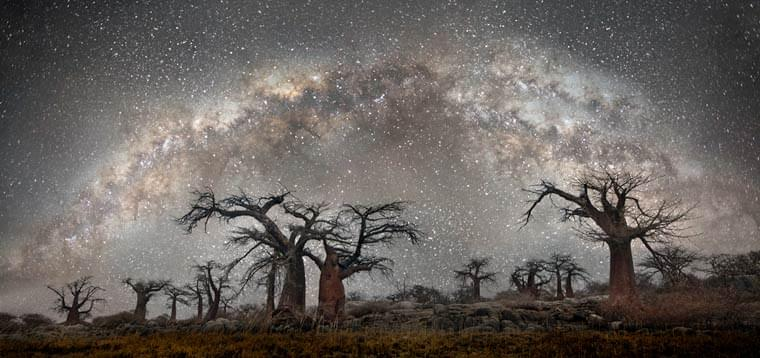 Ancient Trees II – Beautiful night photographs of the oldest trees around the world