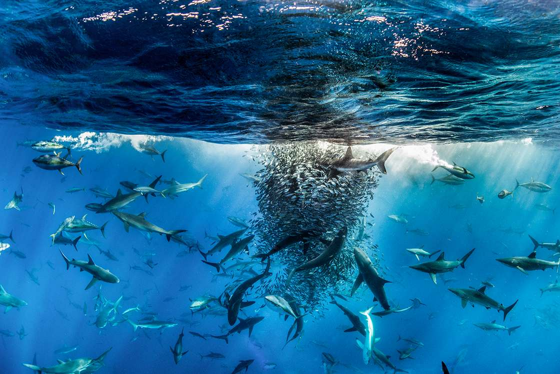 The amazing winning photos of the BigPicture Natural World Contest