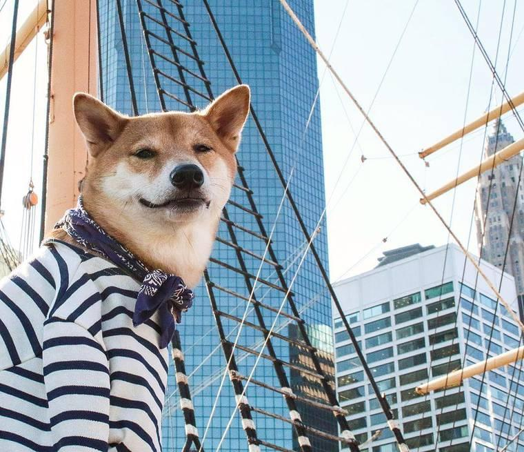 Menswear Dog – When a cute Shiba Inu has more style than you