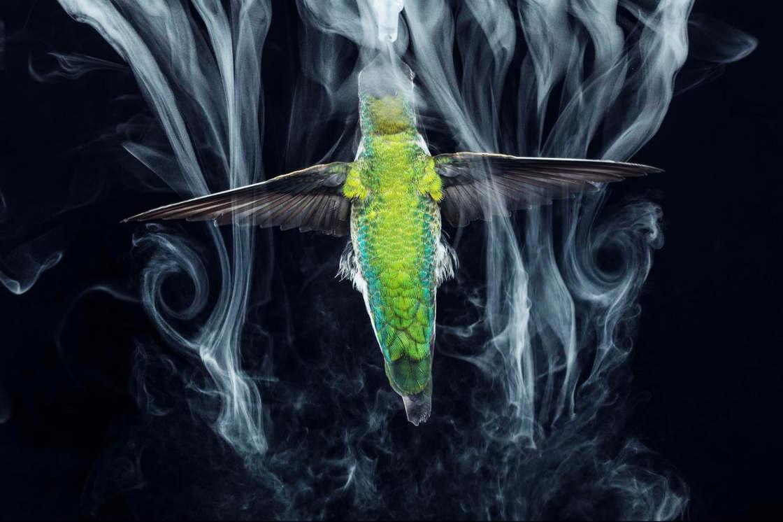 Observing hummingbirds at 3000 frames per second is fascinating