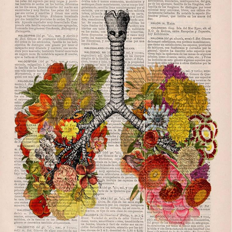 Floral Anatomy – Beautiful poetic illustrations on old book pages