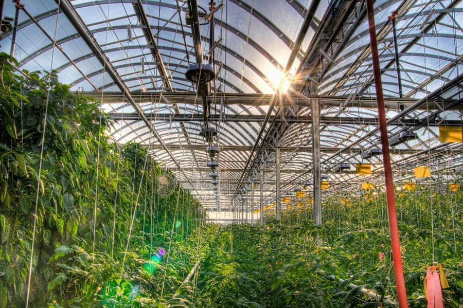Urban Farming - Approaches to sustainable agriculture in several of the world's largest cities
